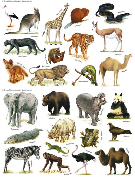 Dessins en couleurs imprimer animaux num ro 18598 - Dessin de tous les animaux ...