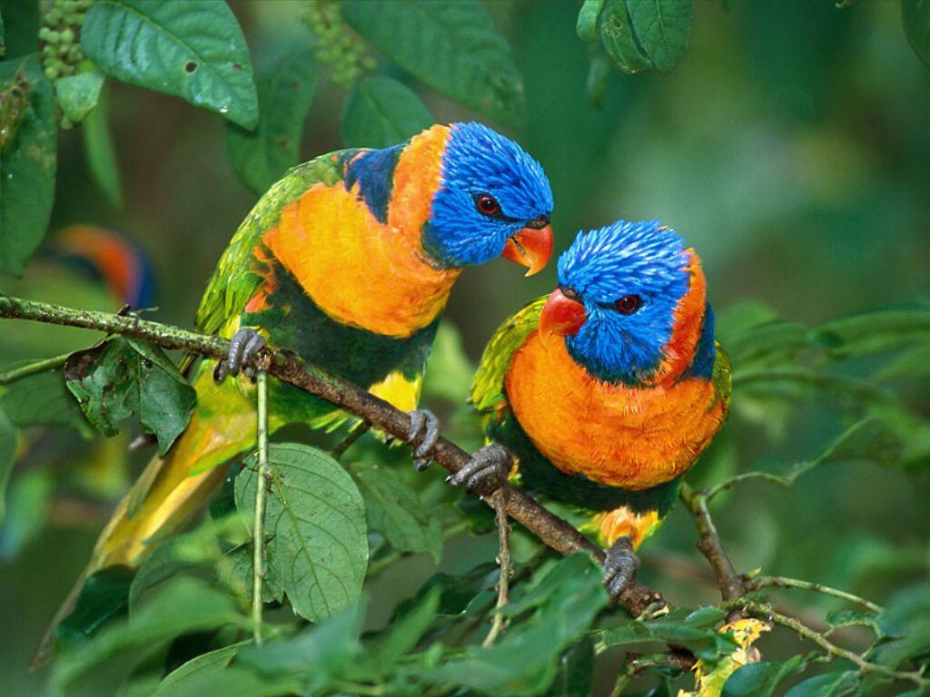 Dessins en couleurs imprimer animaux num ro 279770 - Animaux a imprimer en couleur ...