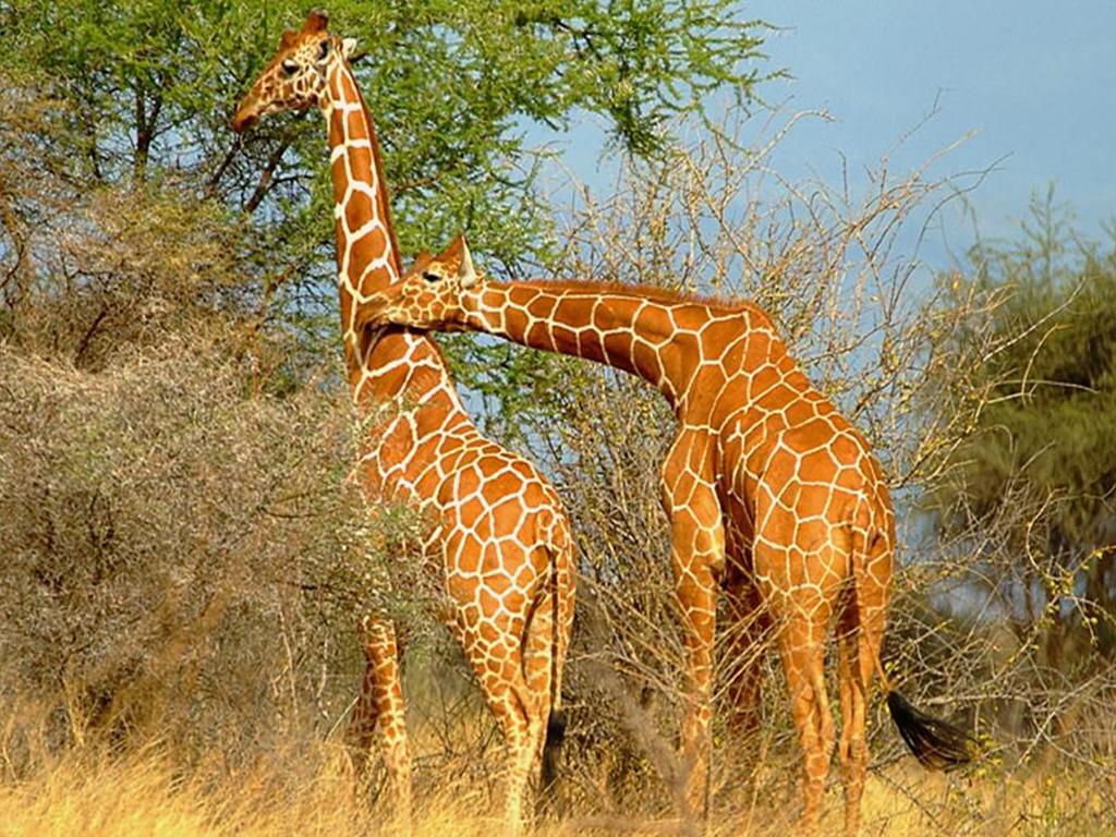 Dessins en couleurs imprimer animaux num ro 336690 - Animaux a imprimer en couleur ...