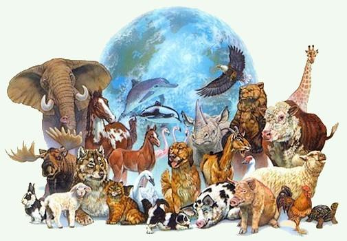 Dessins en couleurs imprimer animaux num ro 564172 - Dessin de tous les animaux ...