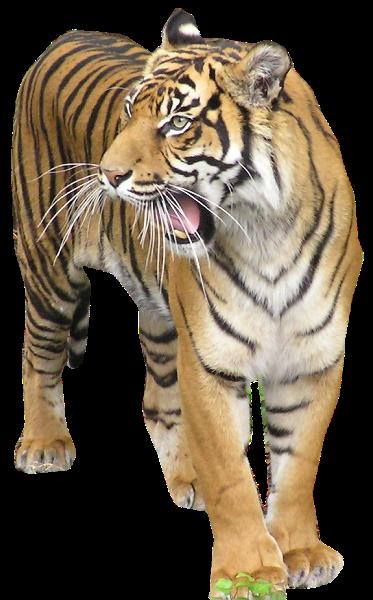Dessins en couleurs imprimer animaux carnivores num ro 22588 - Animaux a imprimer en couleur ...