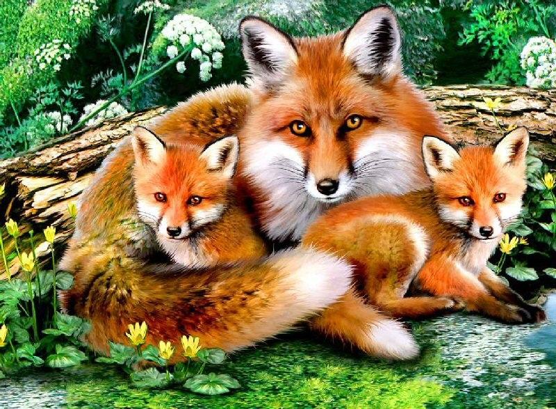 Dessins en couleurs imprimer animaux carnivores - Dessins d animaux sauvages ...