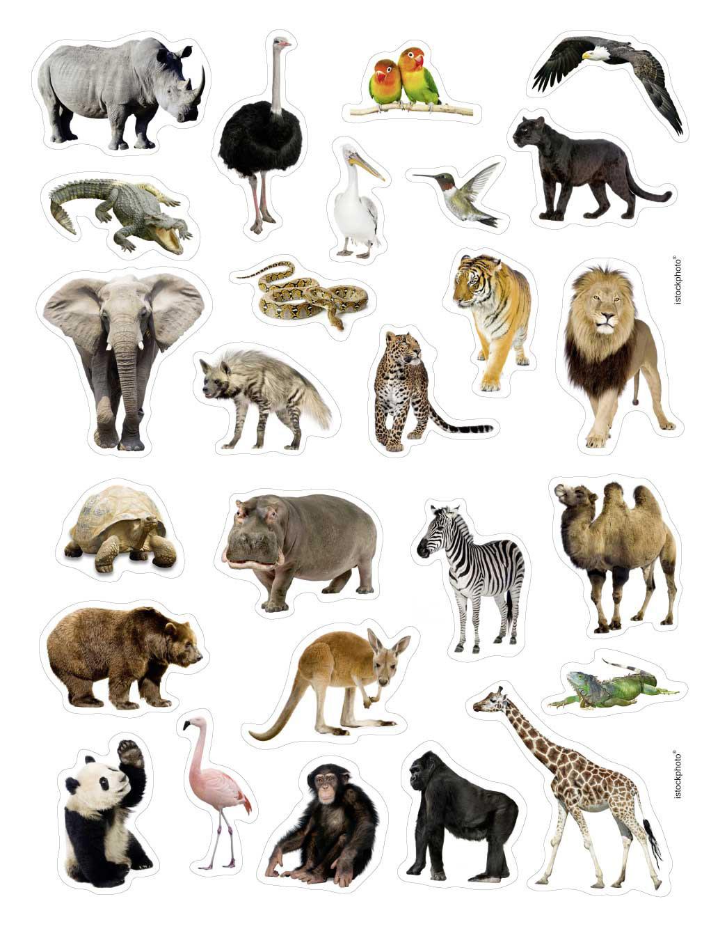 Dessins en couleurs imprimer animaux carnivores - Dessin de tous les animaux ...
