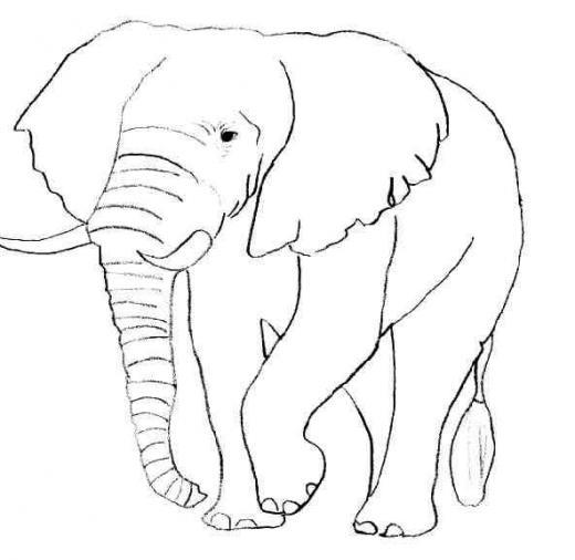 Coloriages imprimer animaux carnivores num ro 542298 - Dessin animaux sauvages ...