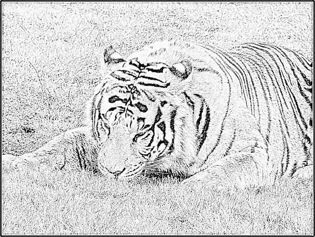 Coloriages imprimer animaux carnivores num ro 64669 - Coloriages animaux sauvages ...
