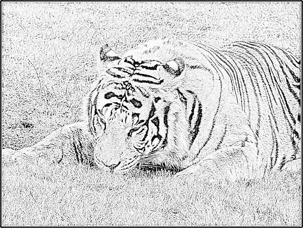 Coloriages imprimer animaux carnivores num ro 676919 - Dessin animaux sauvages ...