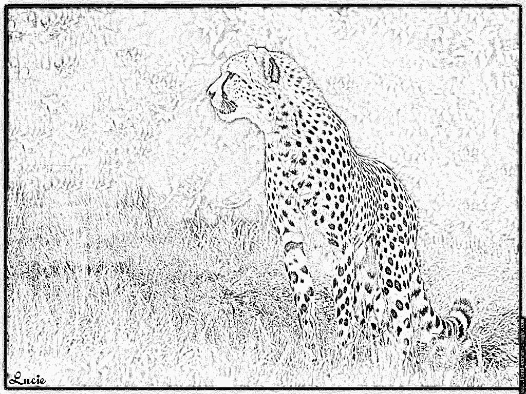 Coloriages imprimer guepard num ro 55944 - Guepard dessin ...