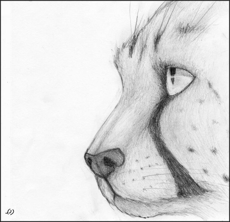 Coloriages imprimer guepard num ro 64735 - Coloriage mini loup et les pirates ...
