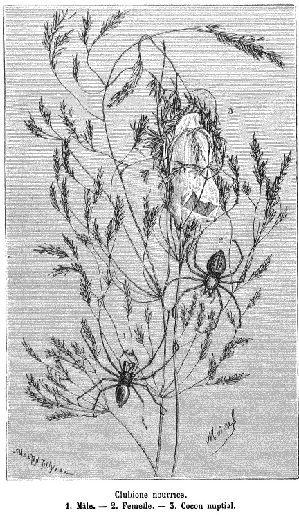Coloriages à imprimer : Arachnides, numéro : 198139