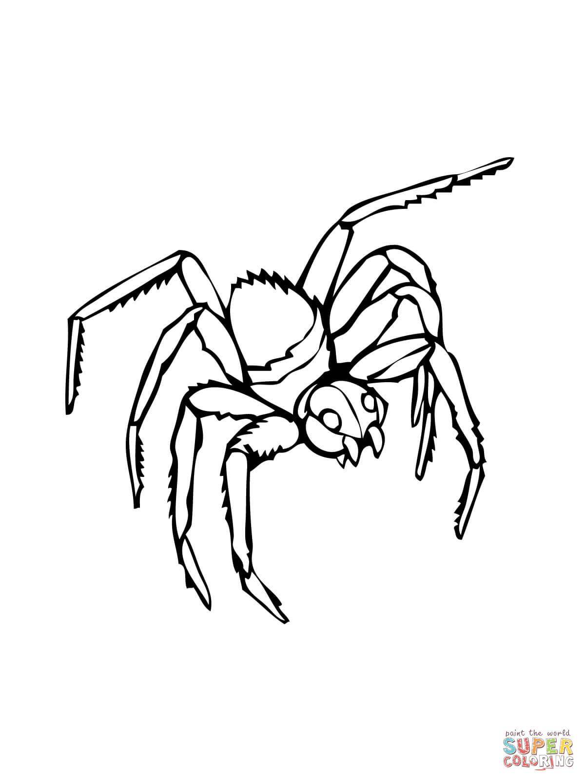 Coloriages à imprimer : Arachnides, numéro : 21f88f21