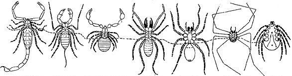 Coloriages à imprimer : Arachnides, numéro : 24087