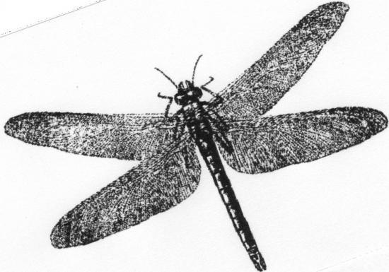 Coloriages à imprimer : Arachnides, numéro : 24096