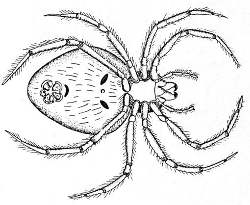 Coloriages à imprimer : Arachnides, numéro : 25718