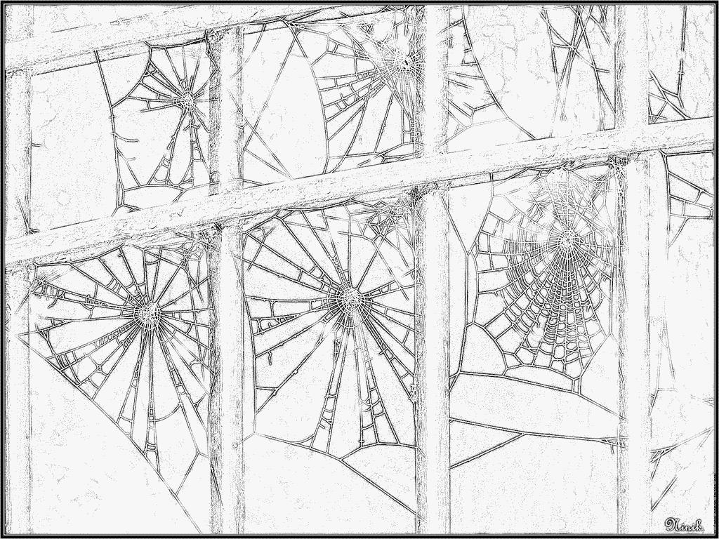 Coloriages à imprimer : Arachnides, numéro : 56142