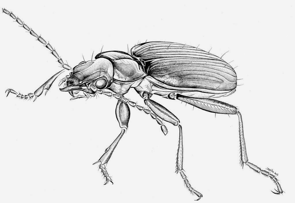 Coloriages à imprimer : Arachnides, numéro : 602151