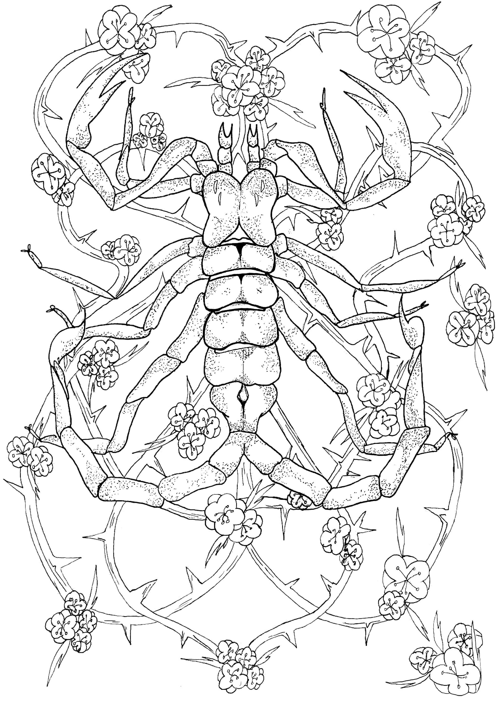 Coloriages à imprimer : Scorpion, numéro : 58127707