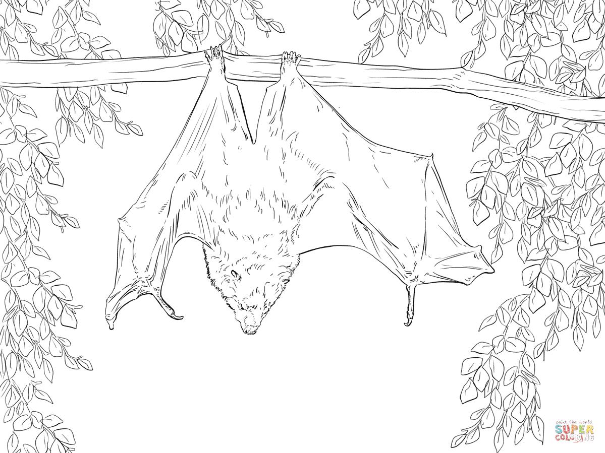 Coloriages à imprimer : Arachnides, numéro : f996c4a2