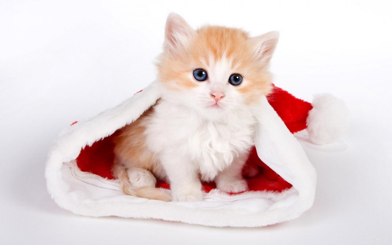 Dessins en couleurs imprimer chat num ro 417258 - Image de chat a imprimer ...