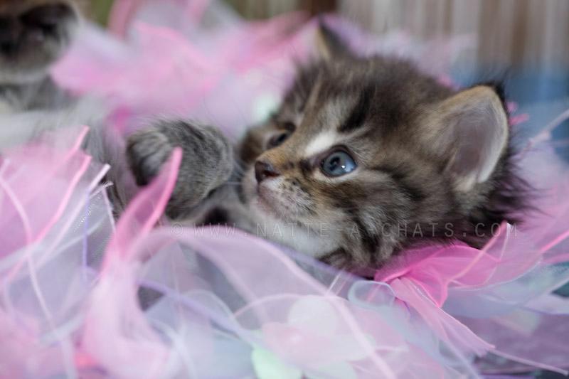 Image de chaton a imprimer ps38 montrealeast - Animaux a imprimer en couleur ...