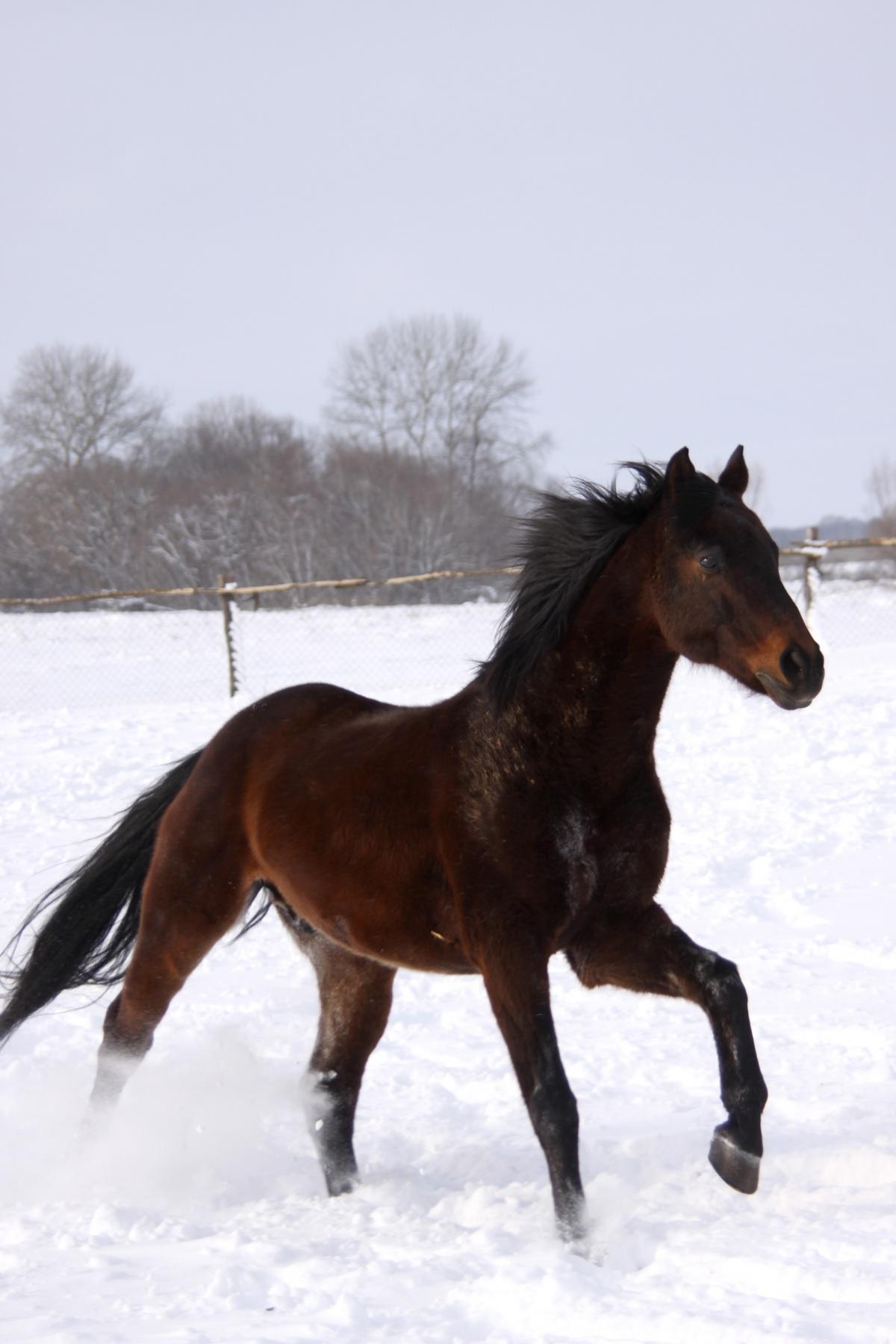 Meilleur de coloriage imprimer cheval couleur - Animaux a imprimer en couleur ...
