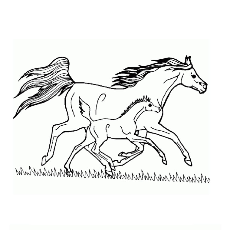 Dessins en couleurs imprimer cheval num ro 20894 - Coloriage poulain ...