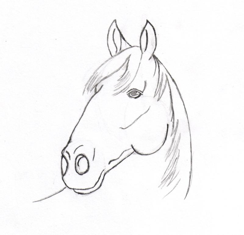 Dessins en couleurs imprimer cheval num ro 20895 - Dessin tete de chien ...