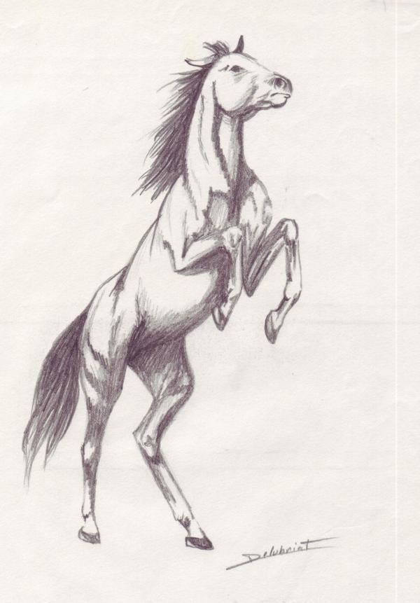 Cheval qui cabre dessin colorier les enfants - Frison qui saute ...