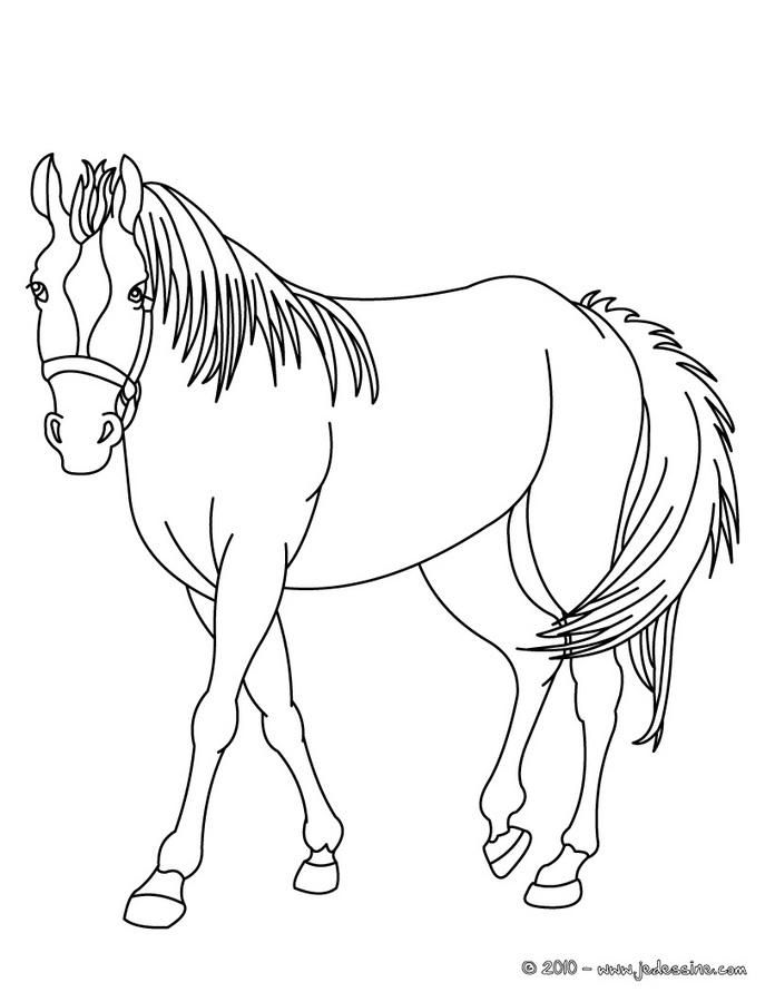 Coloriages imprimer cheval num ro 224863 - Chevaux dessins ...