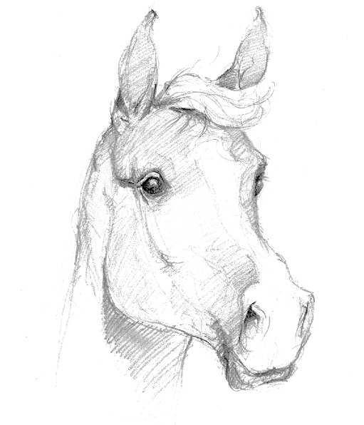 Dessin cheval facile fj68 jornalagora - Dessin cheval facile faire ...