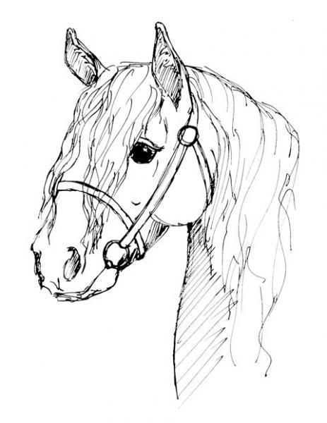 Coloriages imprimer cheval num ro 5383 - Tete de cheval a imprimer ...