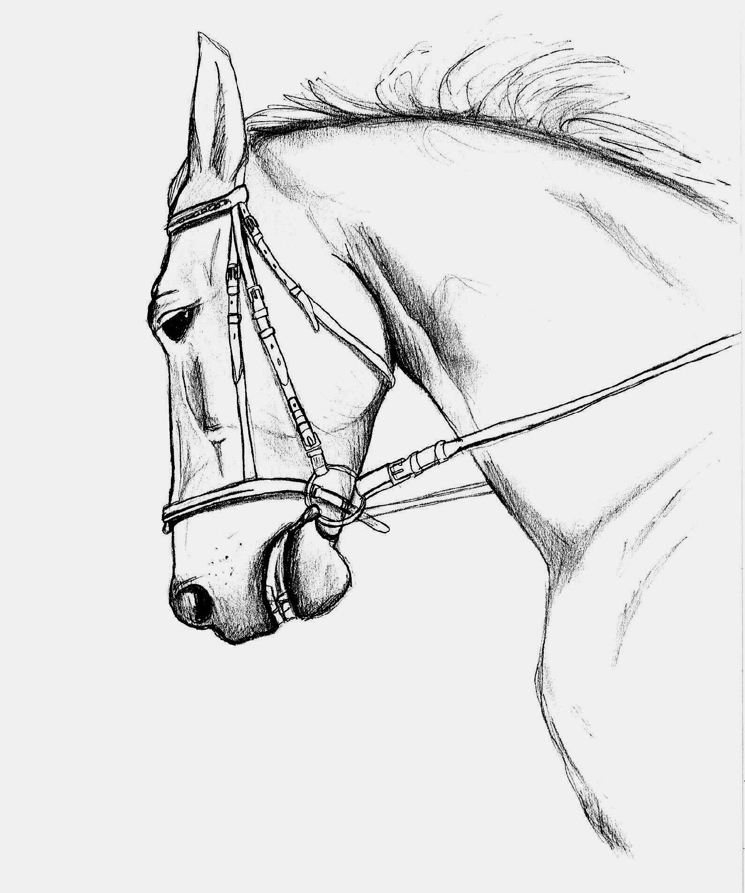 Coloriages imprimer cheval num ro 598 - Dessins de chevaux facile ...