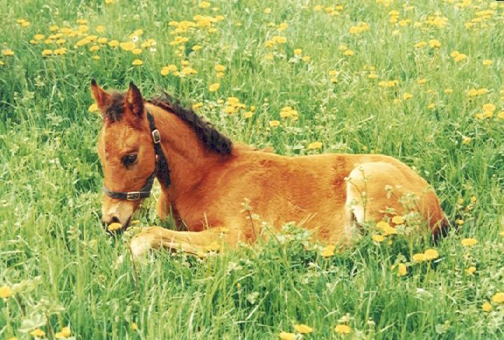 Dessins en couleurs imprimer cheval num ro 616227 - Dessin de poulain a imprimer ...