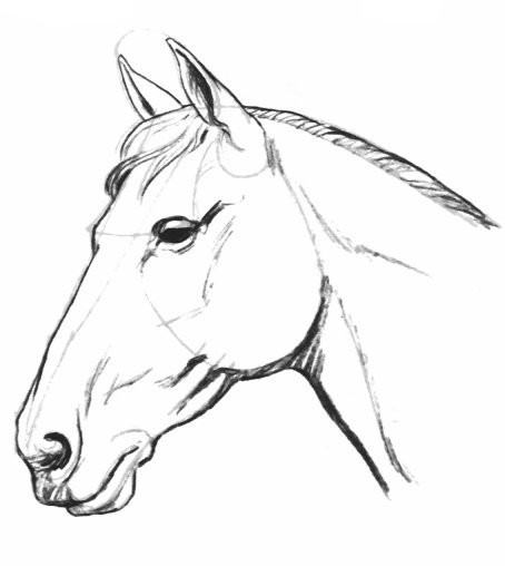 Coloriages imprimer cheval num ro 672728 - Dessins de chevaux facile ...