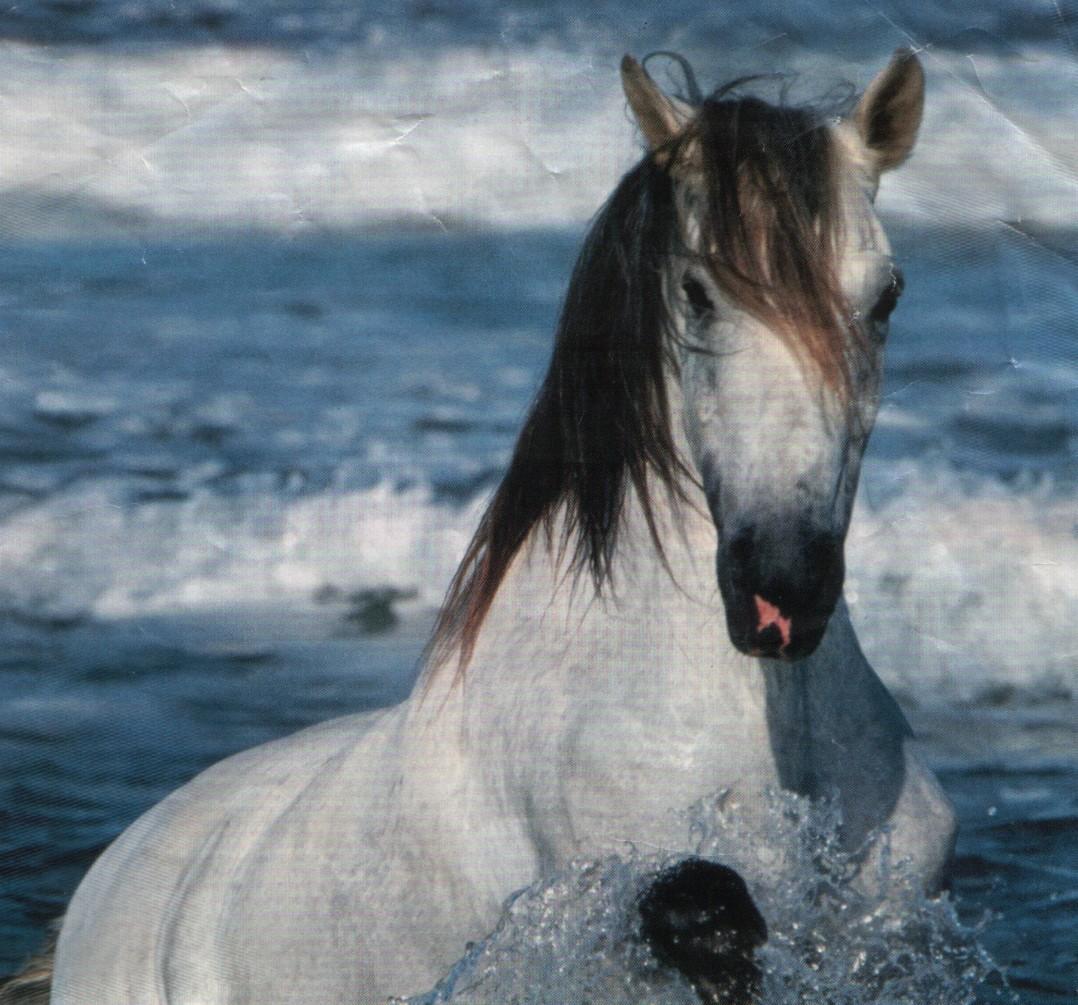 Dessins en couleurs imprimer cheval num ro 683200 - Imprimer un cheval ...