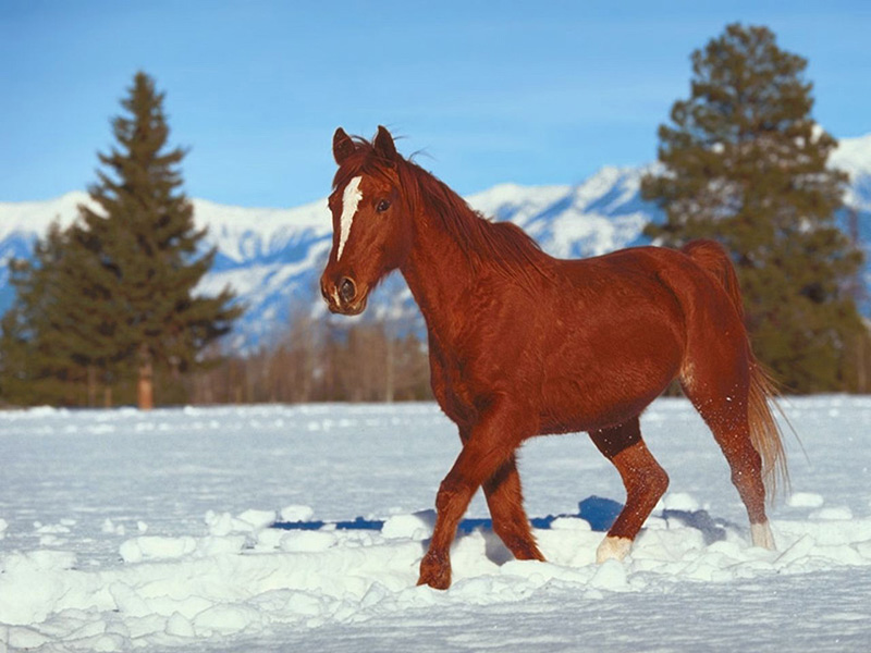 Photo cheval a imprimer yy54 jornalagora - Animaux a imprimer en couleur ...