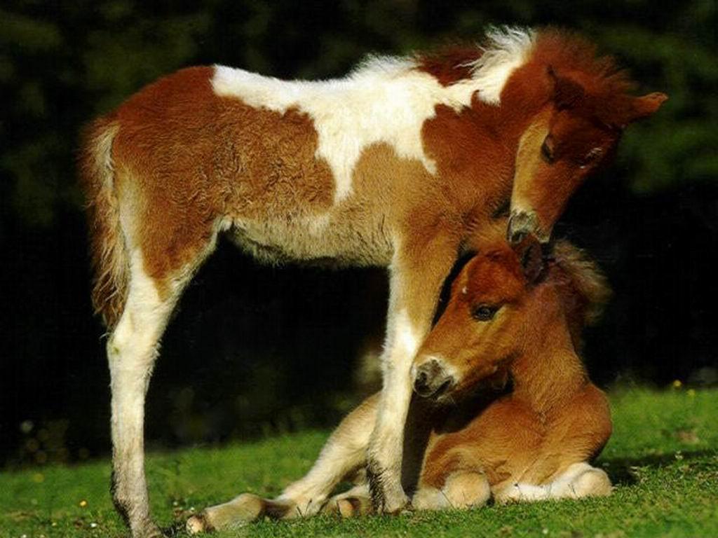 Dessins en couleurs imprimer cheval num ro 683220 - Dessin de poulain a imprimer ...