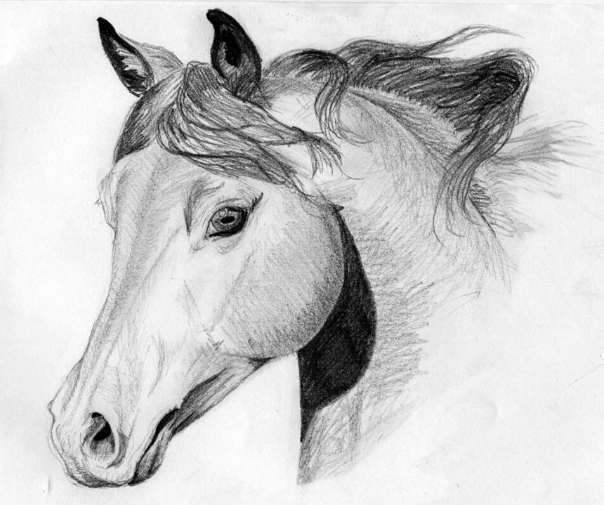 Coloriages imprimer cheval num ro 7629 - Dessins de chevaux facile ...