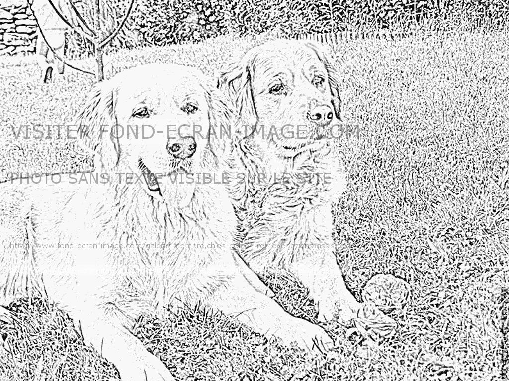Coloriages imprimer chien num ro 576893 - Coloriage de chien et chat ...