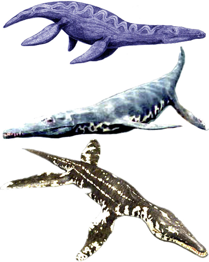 Dessins en couleurs imprimer dinosaures num ro 208778 - Dinosaure marin carnivore ...