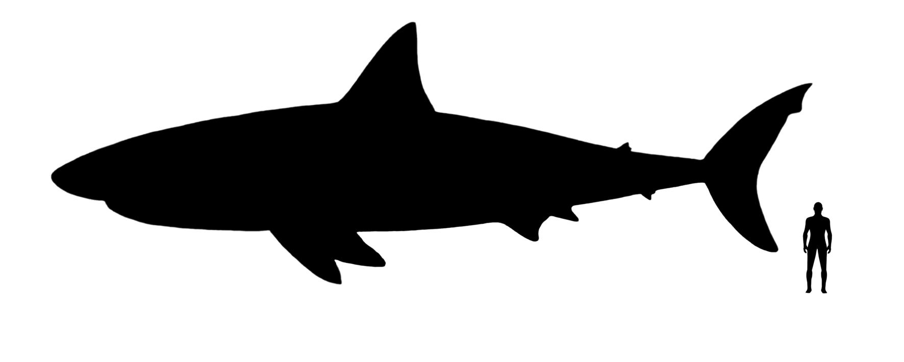 Coloriages imprimer pterodactyle num ro 220328 - Coloriage de requin a imprimer ...