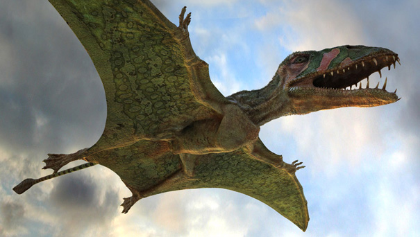 blogs, webzines, ressources musicales du net! - Page 24 Animaux-Dinosaures-Pterodactyle-670678