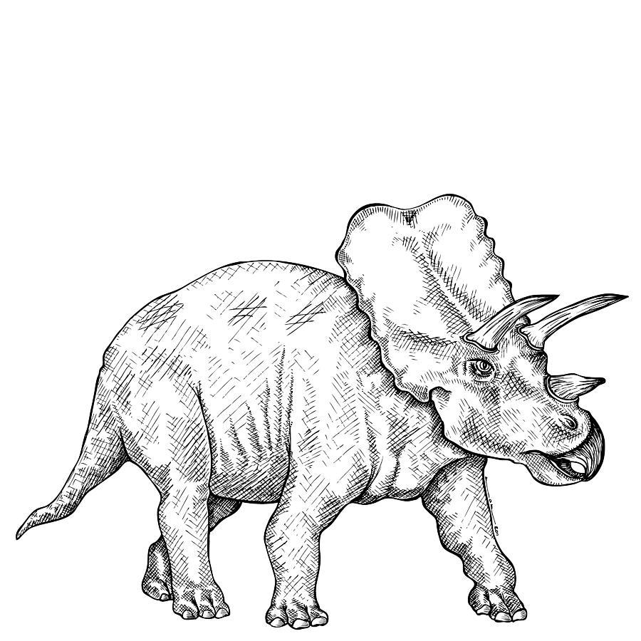 coloriages 224 imprimer triceratops num233ro 220163