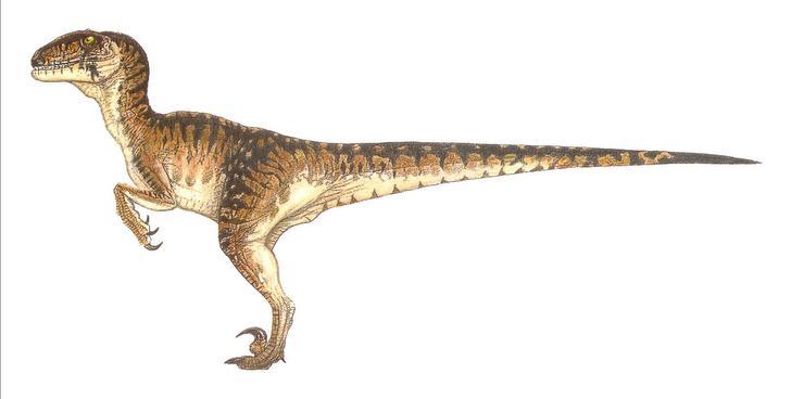 imprimer le dessin en couleurs animaux dinosaures velociraptor numro 219412