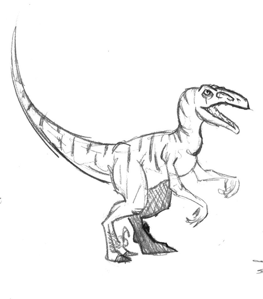 Coloriage imprimer animaux dinosaures v lociraptor num ro 220245