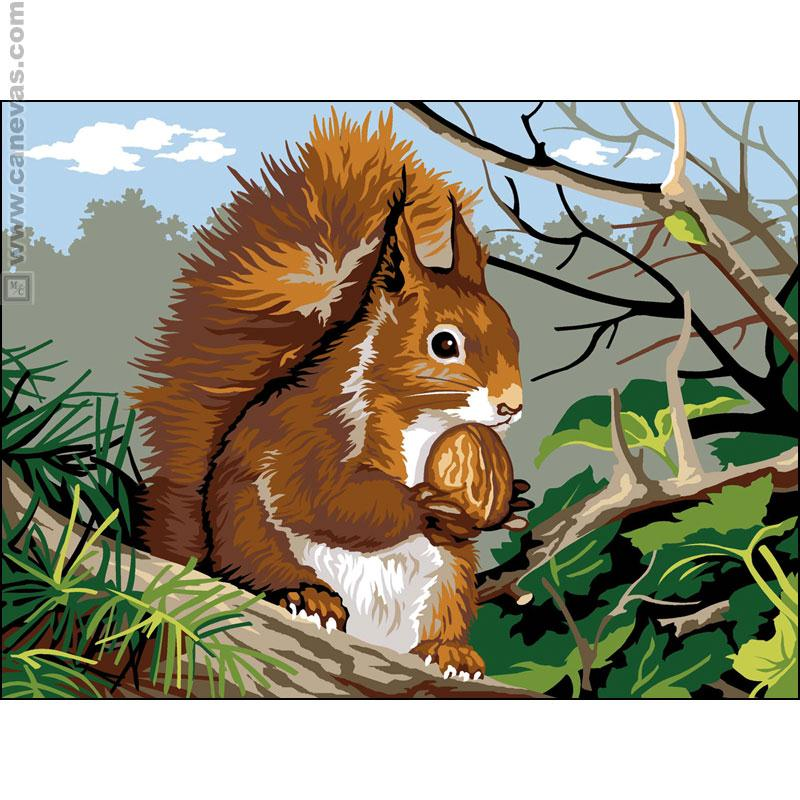 Dessins en couleurs imprimer ecureuil num ro 279761 - Ecureuil a dessiner ...