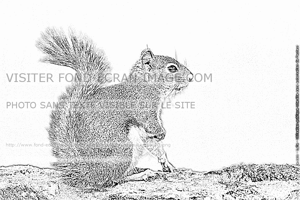 Coloriages à imprimer : Ecureuil, numéro : 297724