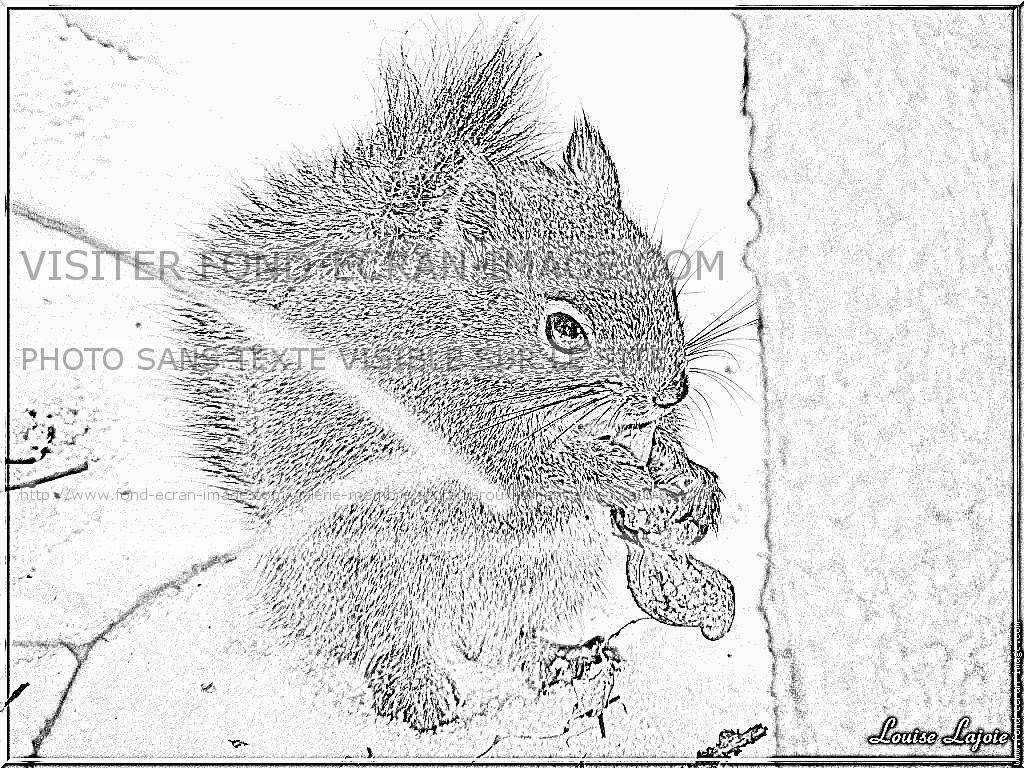 Coloriages à imprimer : Ecureuil, numéro : 304302