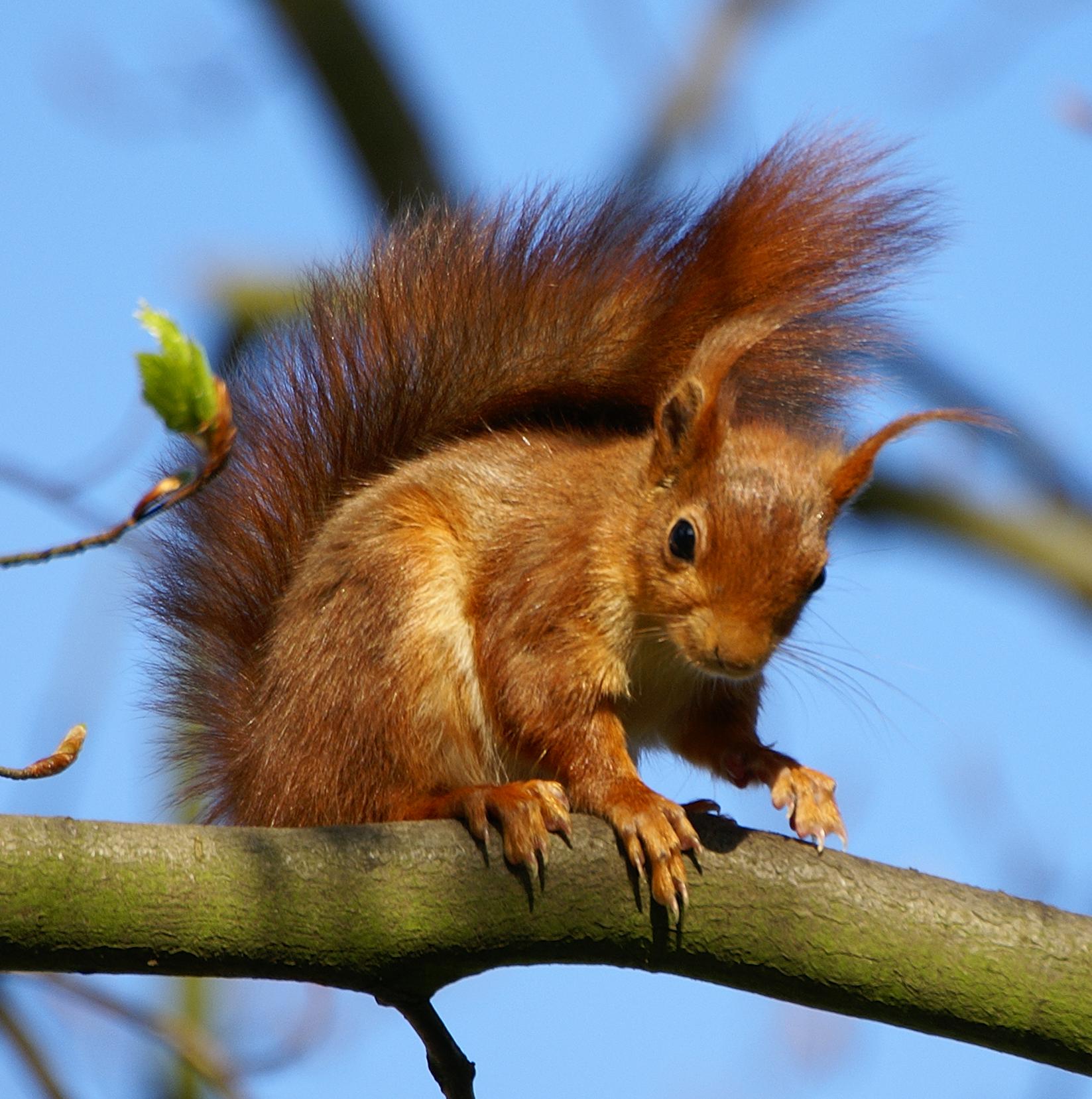 Dessins en couleurs imprimer ecureuil num ro 670927 - Animaux a imprimer en couleur ...