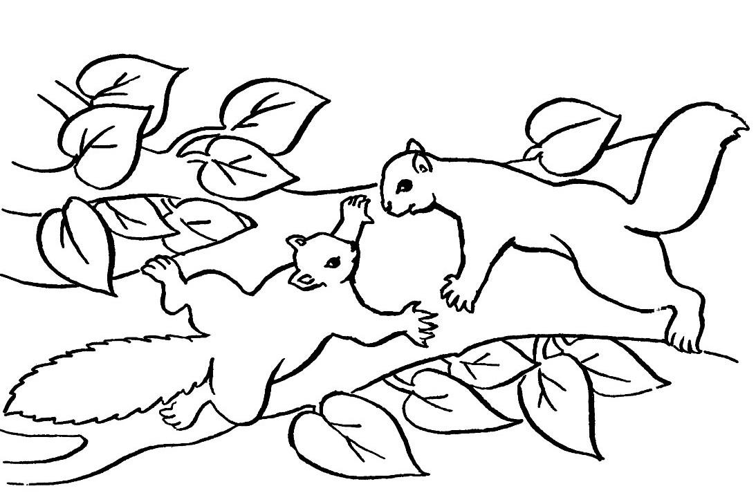 Coloriages à imprimer : Ecureuil, numéro : 69864499