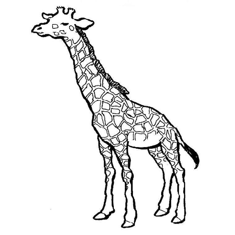 Coloriages à imprimer : Girafe, numéro : 754217